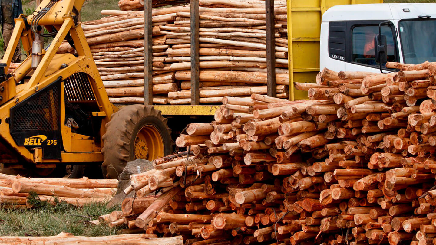 Logistic solutions for the forest industry